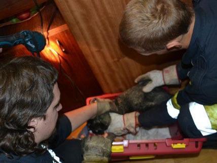 """Kater """"Tequilla"""" war hinter den Wandverbau geklettert und musste von der Feuerwehr befreit werden."""