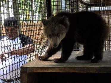 Das erste Foto nach der Befreiung: Bärenbaby Nastia ist endlich wieder in guten Händen.