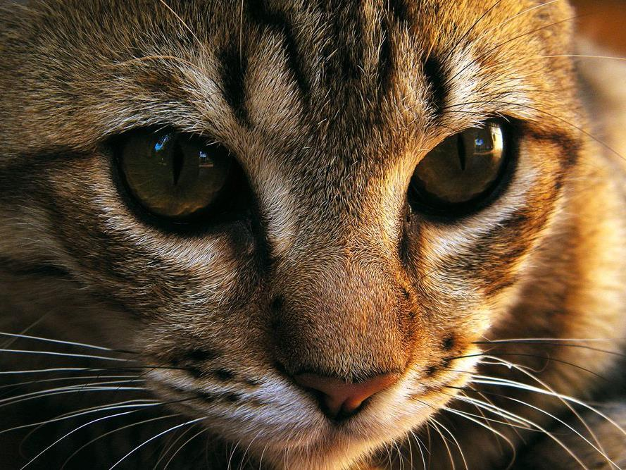 Die Katze überlebte die Tortur, allerdings musste ihr ein Tierarzt den Schwanz amputieren.
