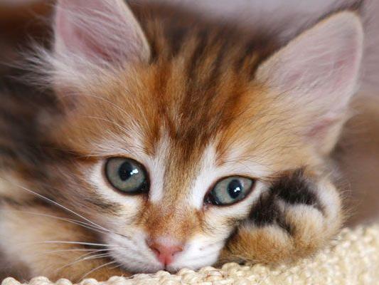 Tierqiäler zog Katze das Fell ab