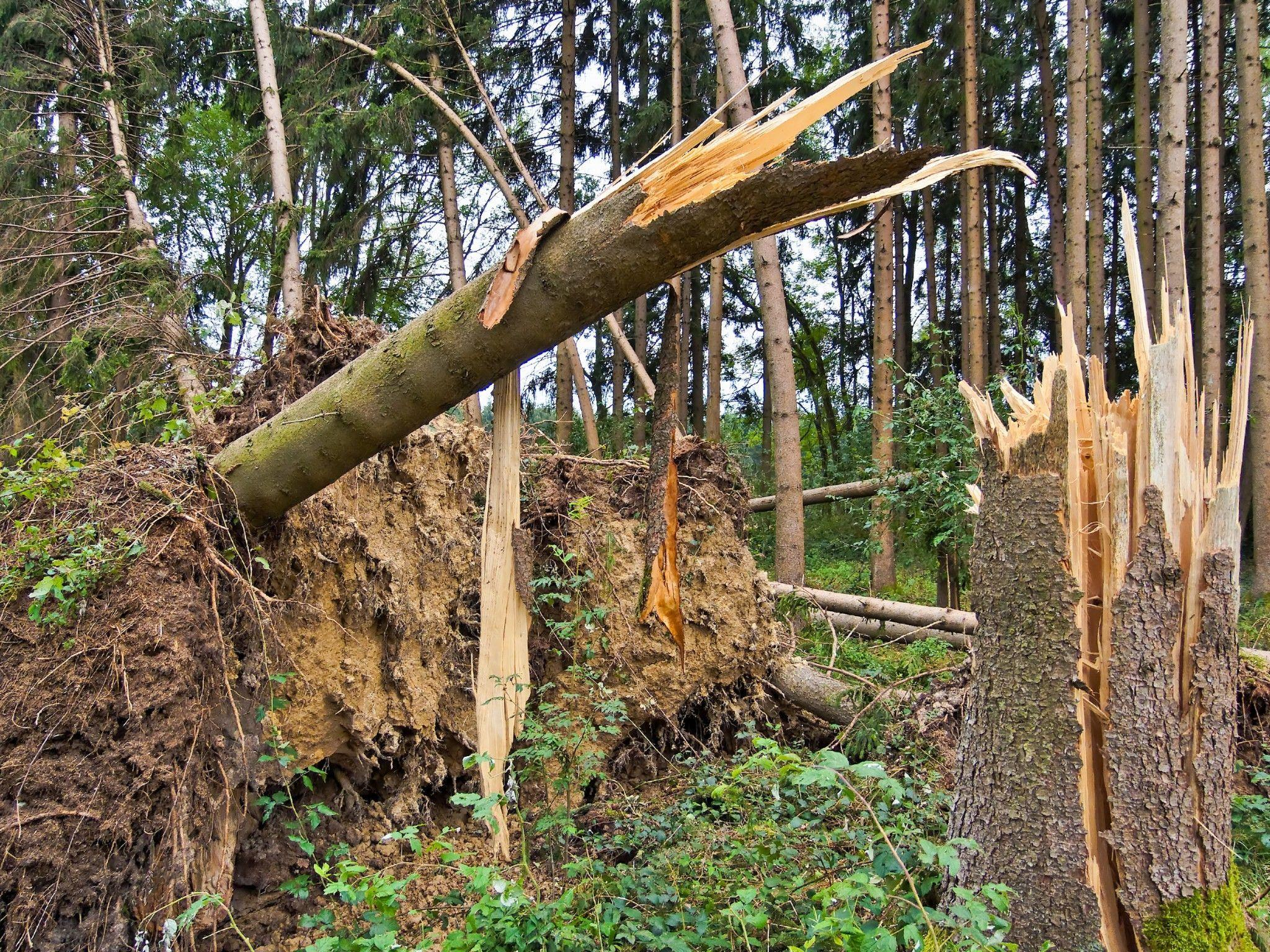 Das Ehepaar musste tot aus dem Wald geborgen werden.