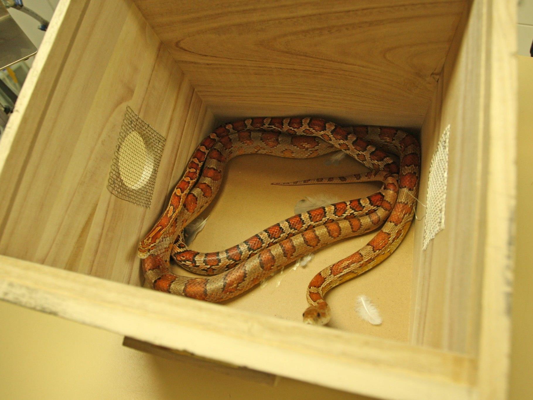 Die Frau hielt in ihrer Wohnung sieben Schlange, vier Katzen und zwei Mäuse.