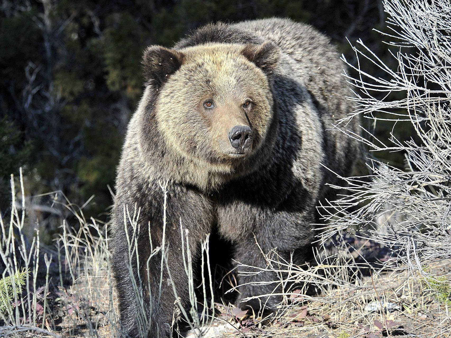 Der Tourist war dem 270 Kilo schweren Tier augenscheinlich viel zu nahe gekommen.