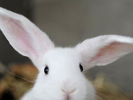 Die Häftlinge sollen sich in der Justizanstalt um Kaninchen aus dem Tierschutzhaus kümmern.
