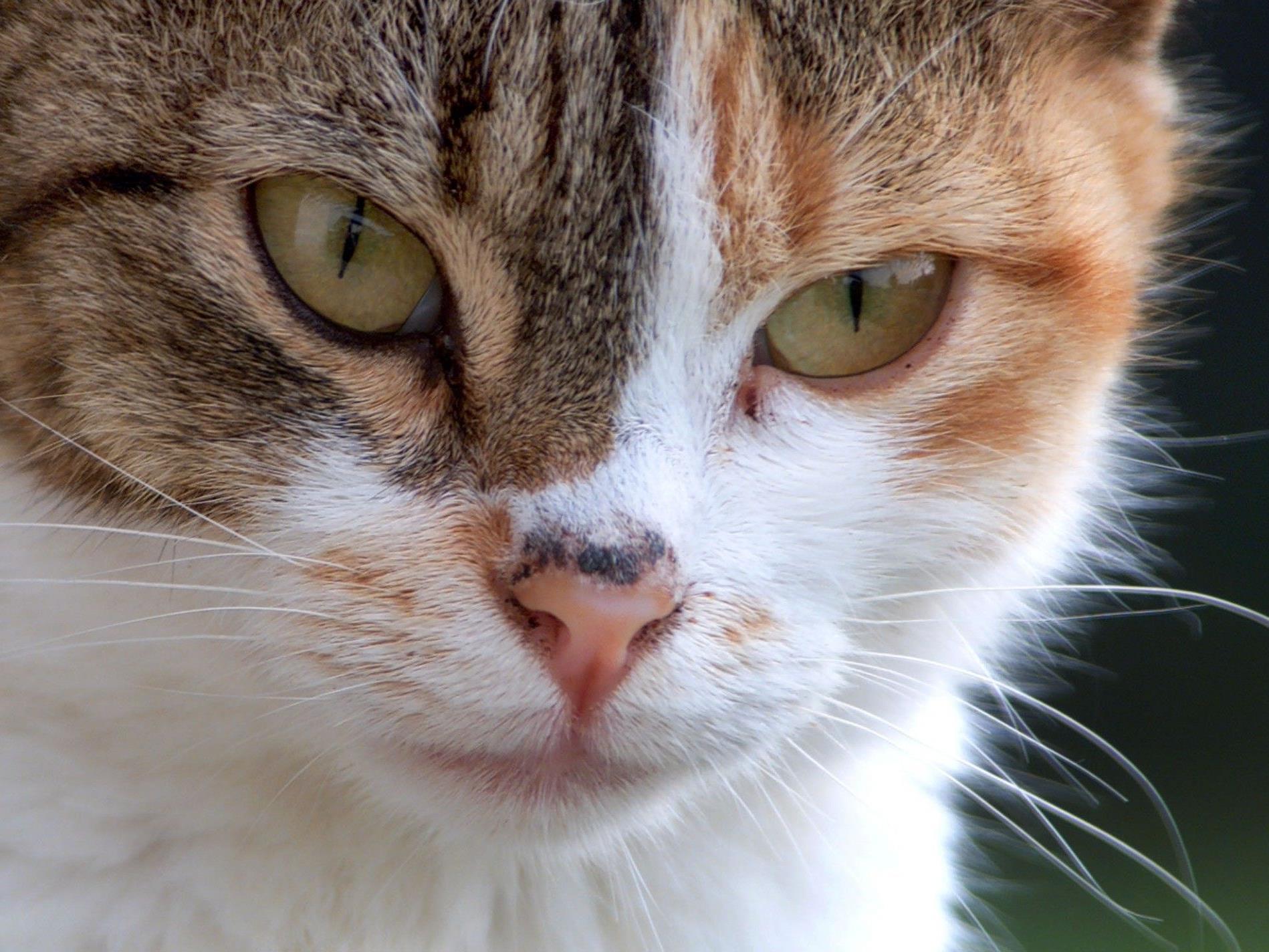 Katzen sprangen auf Küchenher