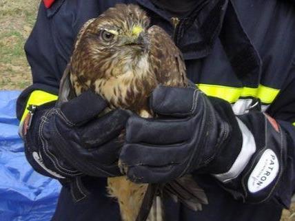 Das verletzte Tier wurde von den Rettungskräften sicher geborgen.