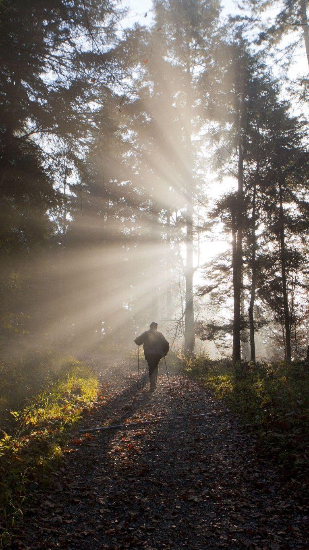 Land Vorarlberg investiert in nachhaltige Waldwirtschaft.