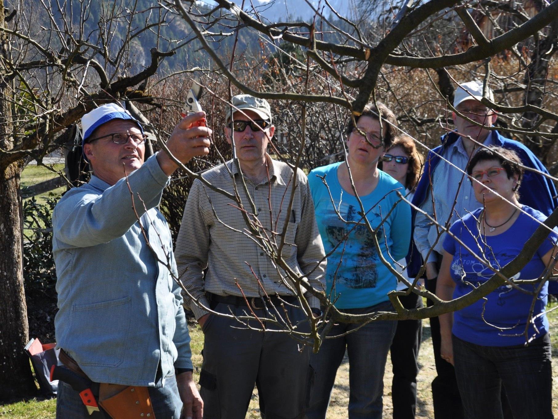 Arthur Bertel - zeigt wie die Bäume geschnitten werden