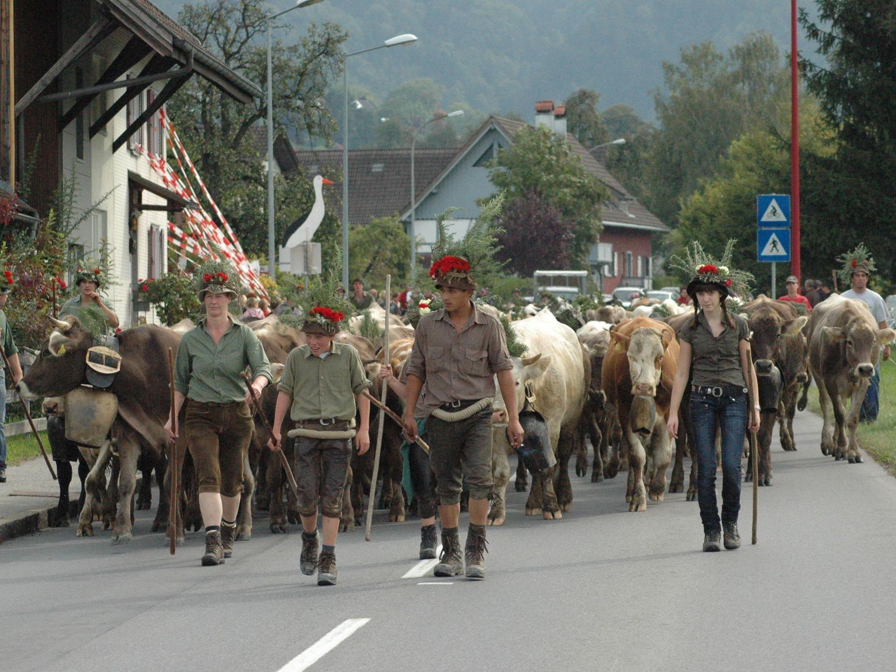 Am Samstag ist Almabtrieb in Sulz.