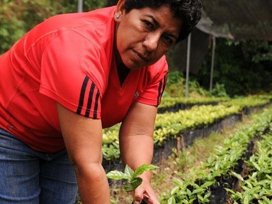 Margarita wird am 25. September im Kolpinghaus Götzis erwartet - sie spricht über Fairen Kaffeeanbau