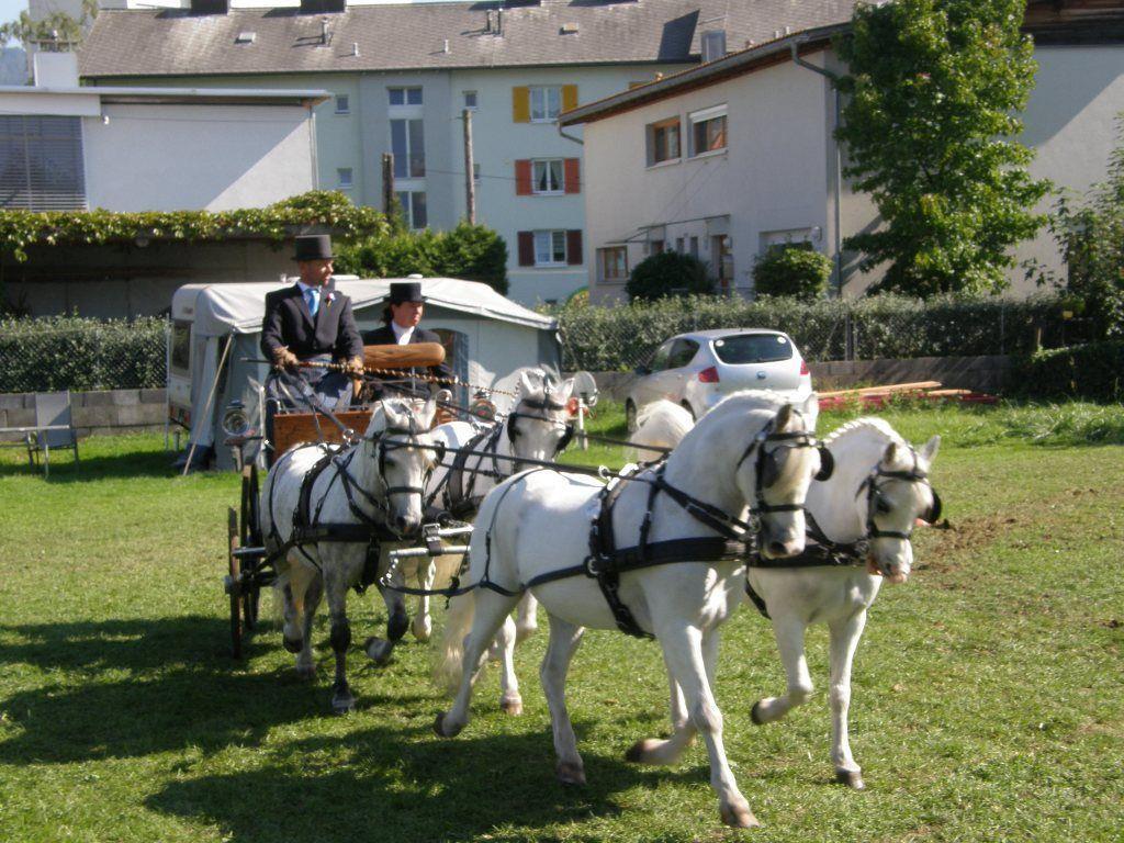 Gespanne aus ganz Europa zu Gast in Bregenz