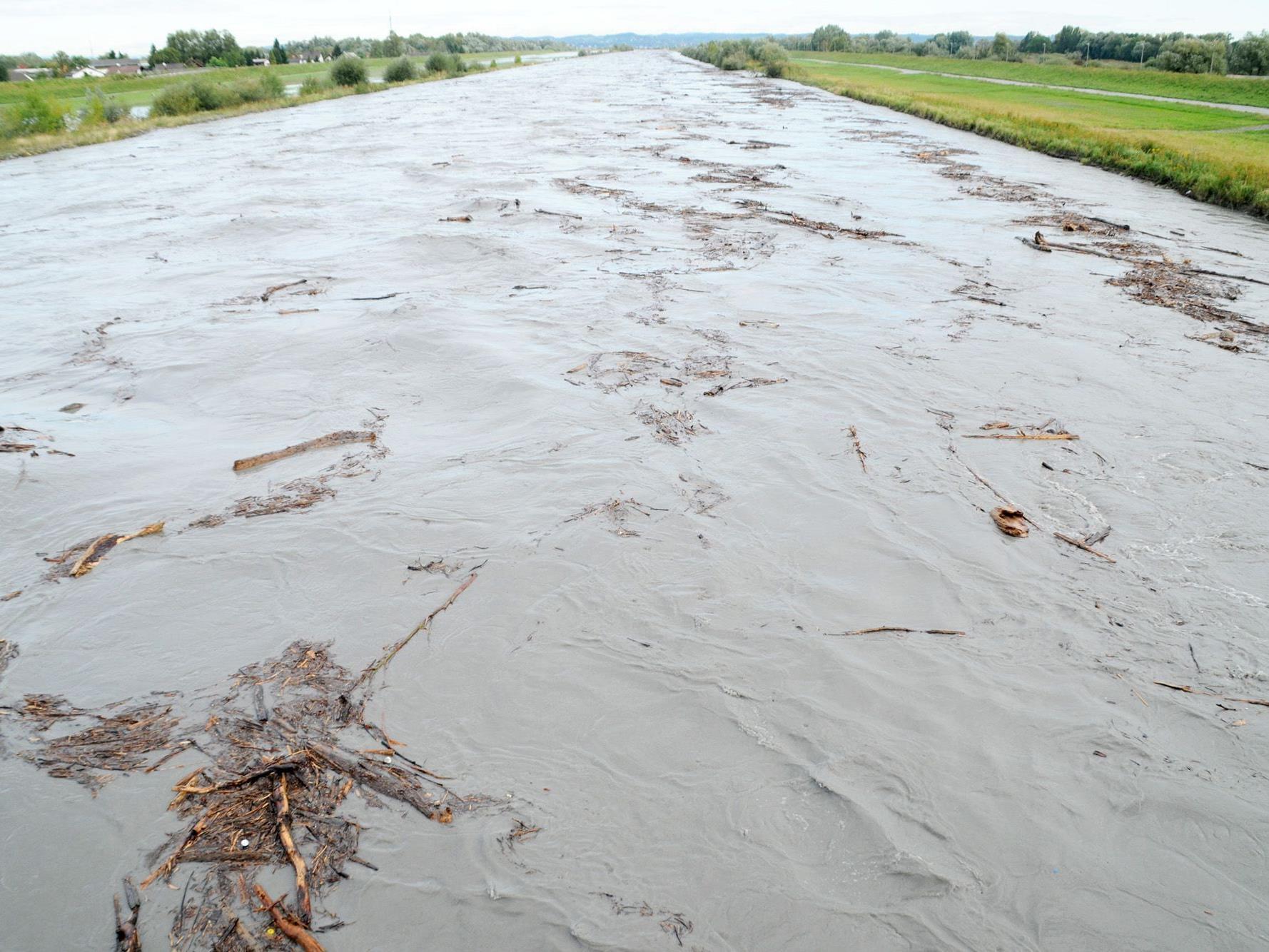 Der übervolle Rhein führte gewaltige Holzmengen mit sich. Aufnahme an der Rheinbrücke Hard-Fußach