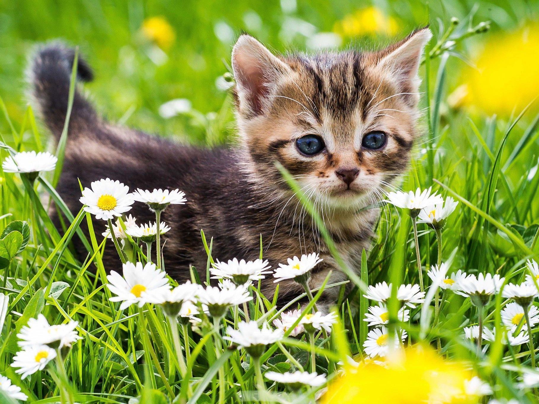 Heute ist Welttierschutztag.