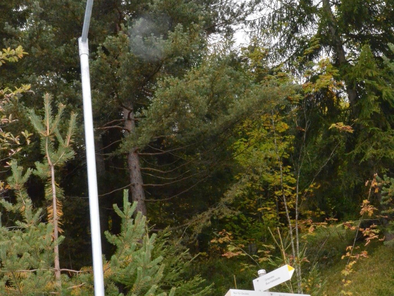 LED-Beleuchtung Wald a. A.