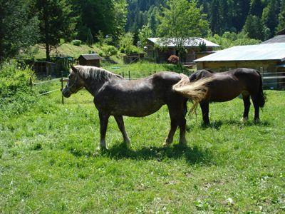 Lisa und Paula haben in Doren-Bozenau ein neues Zuhause gefunden