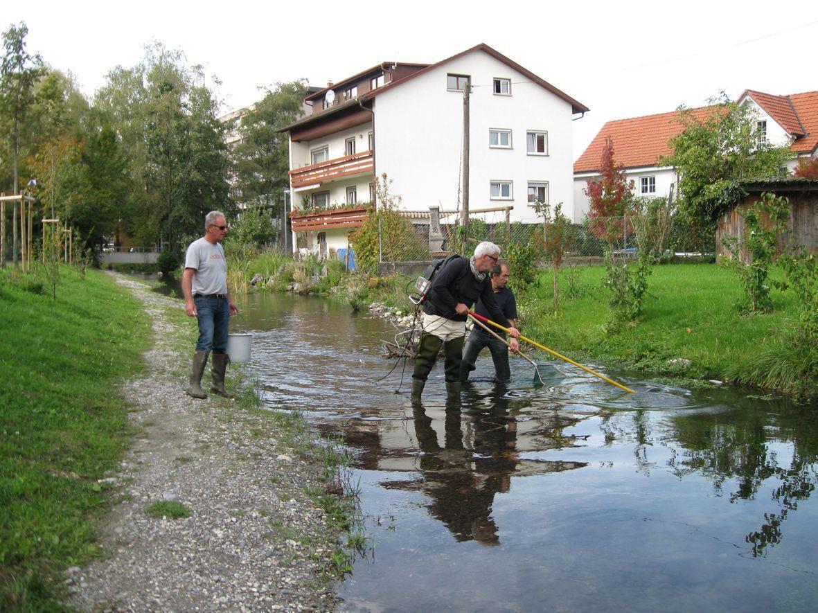 Der Fischbesatz des Dorfbaches wurde untersucht.