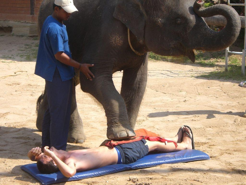 Elefanten als Masseure? In Thailand ist diese Form der Entspannung sehr beliebt.
