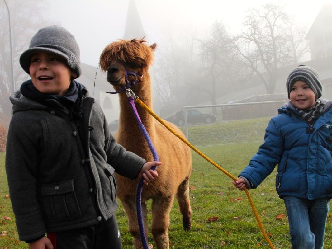 Bei den zahlreich erschienenen Kindern besonders gefragt war das eigene Führen des Lamas oder der fast zahmen Alpacas an der Leine.