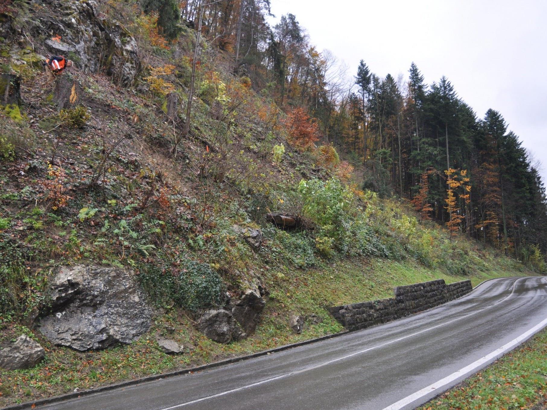 Zwischen Kilometer 1,70 - 1,90 werden im Klauser Wald beidseitig Schutznetze errichtet.