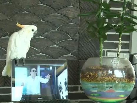 Tierischer Fan macht Rapper Psy nach.