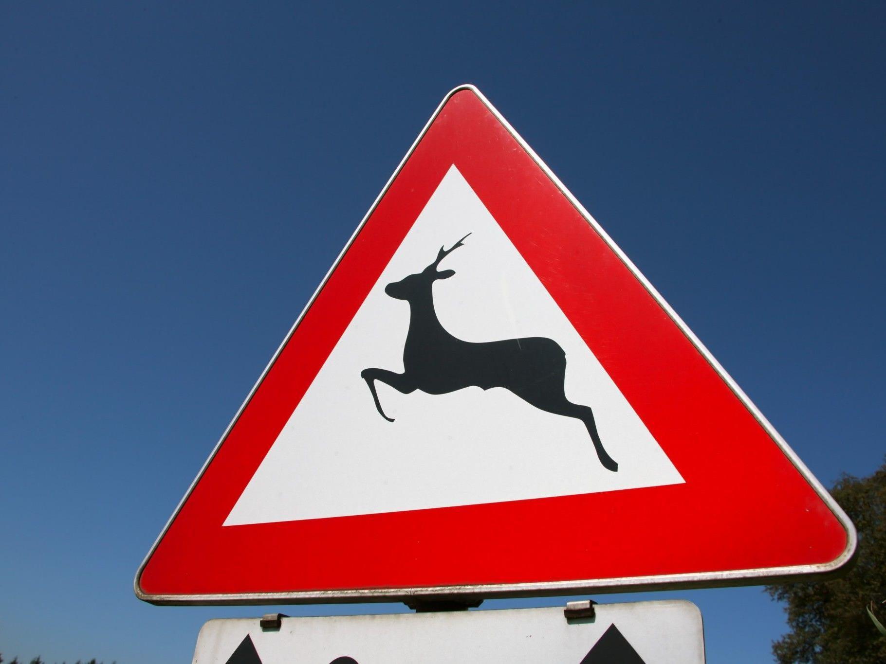 Im Herbst und Frühjahr kommt es vermehrt zu Verkehrsunfällen mit Wild. ©Bilderbox