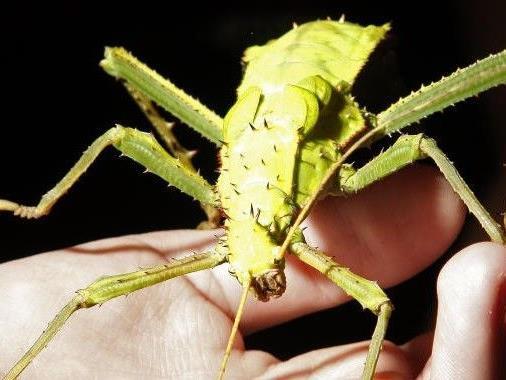 Insekten gegen den Welthunger? Eine vielversprechende Variante.
