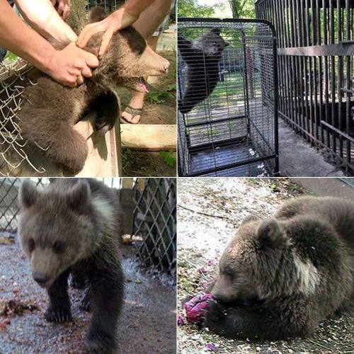 Ihr Leben begann voller Leid, nun darf die kleine Nastia in ein artgerechtes Bären-Paradies umziehen.