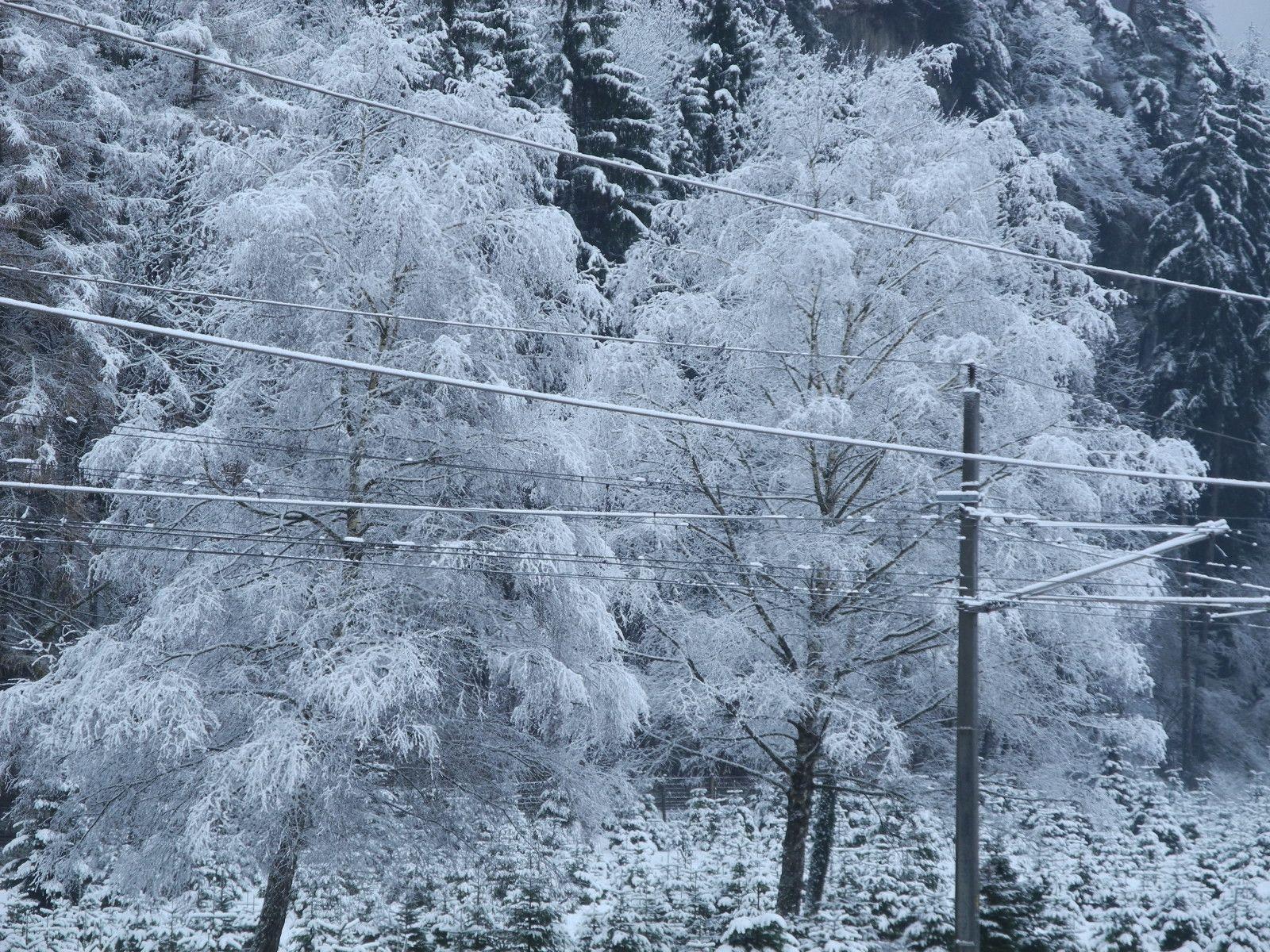 Ein fein gezuckertes Baumpaar im Feldkircher Tilliswald