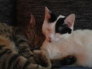 2 süsse Katzen zu vergeben