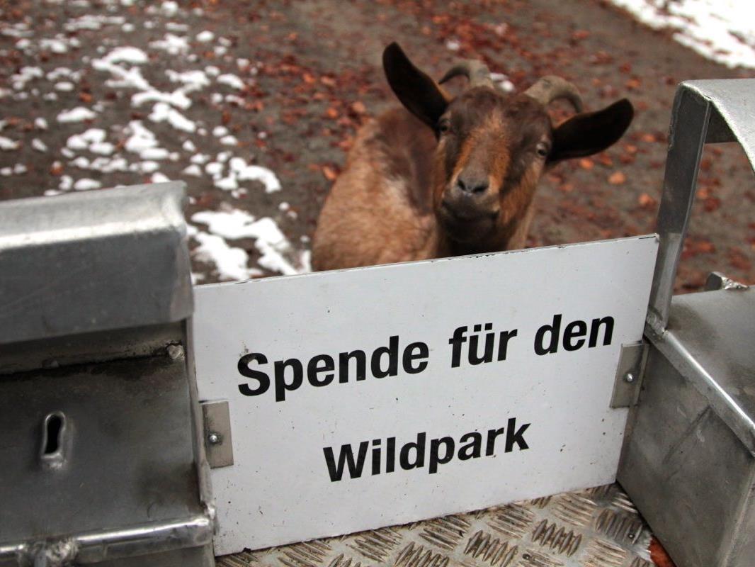Die Spendenkasse ist die wichtigste Einnahmequelle für den Wildpark und wird im Jubiläumsjahr moderner gestaltet – aber die Wildparkziege freut sich auch heute , wenn sie etwas spenden!
