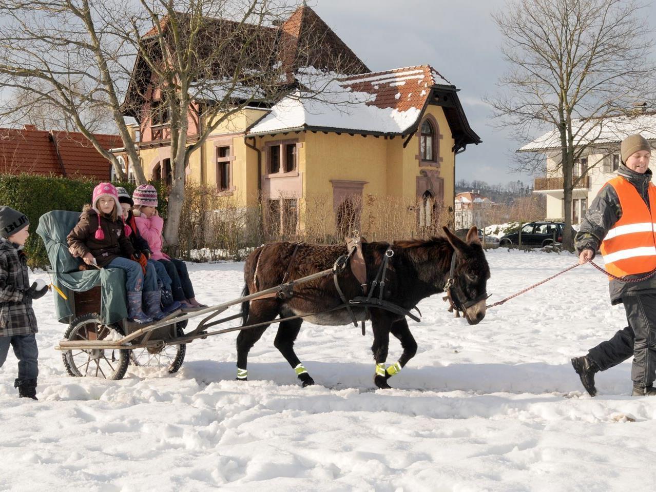 Ausfahrt im Eselwagen beim Weihnachtsmarkt in Gaißau am Sonntag, den 16. Dezember