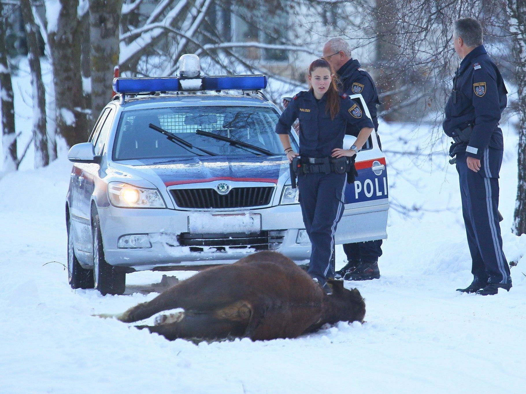 Das Tier musste von der Polizei erlegt werden.