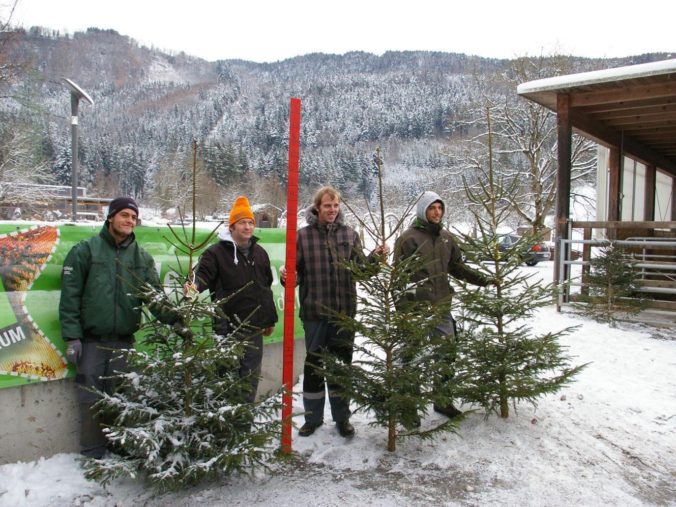 """Am Sunnahof werden nur echte """"Ländle Christbäume"""" aus der Region verkauft. Das Sunnahof-Team ist für den Ansturm gerüstet."""