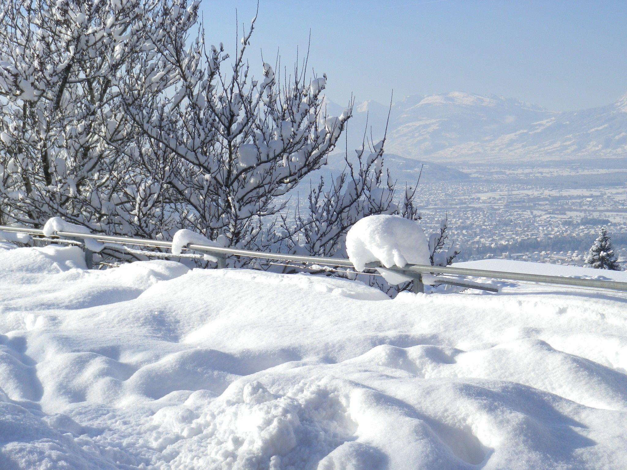 Dafins im Schneekleid