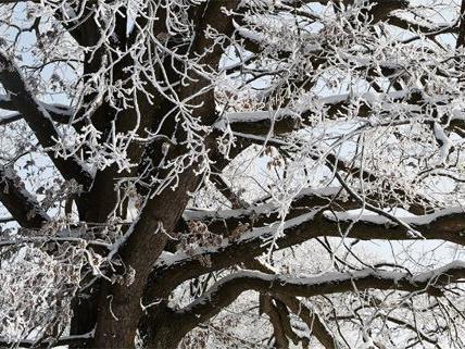 Gefahr durch Eislast auf Bäumen: Die Straßensperren wurden aufgehoben.