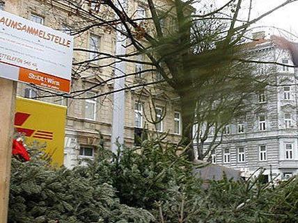 MA 48 stellt auch heuer Christbaumsammelstellen in Wien zur Verfügung