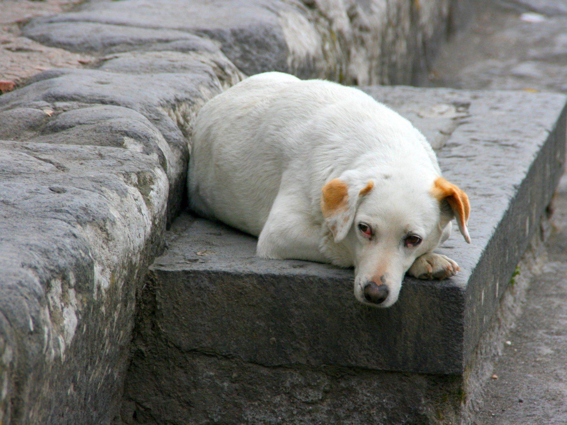 Viele Tiere erleben den Jahreswechsel völlig verängstigt.