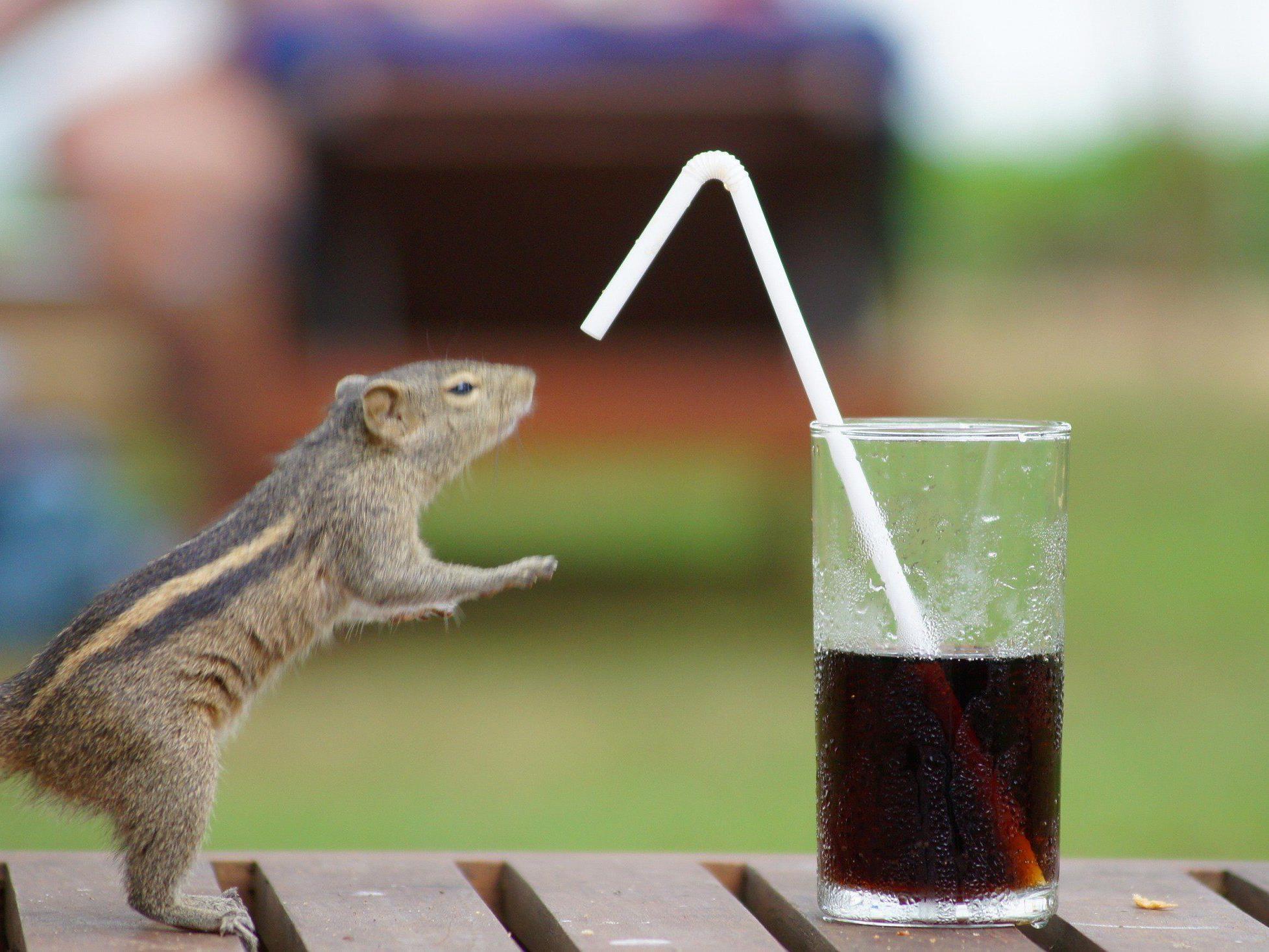 Zu süß: Wer kann schon einem srilankischen Streifenhörnchen böse sein...
