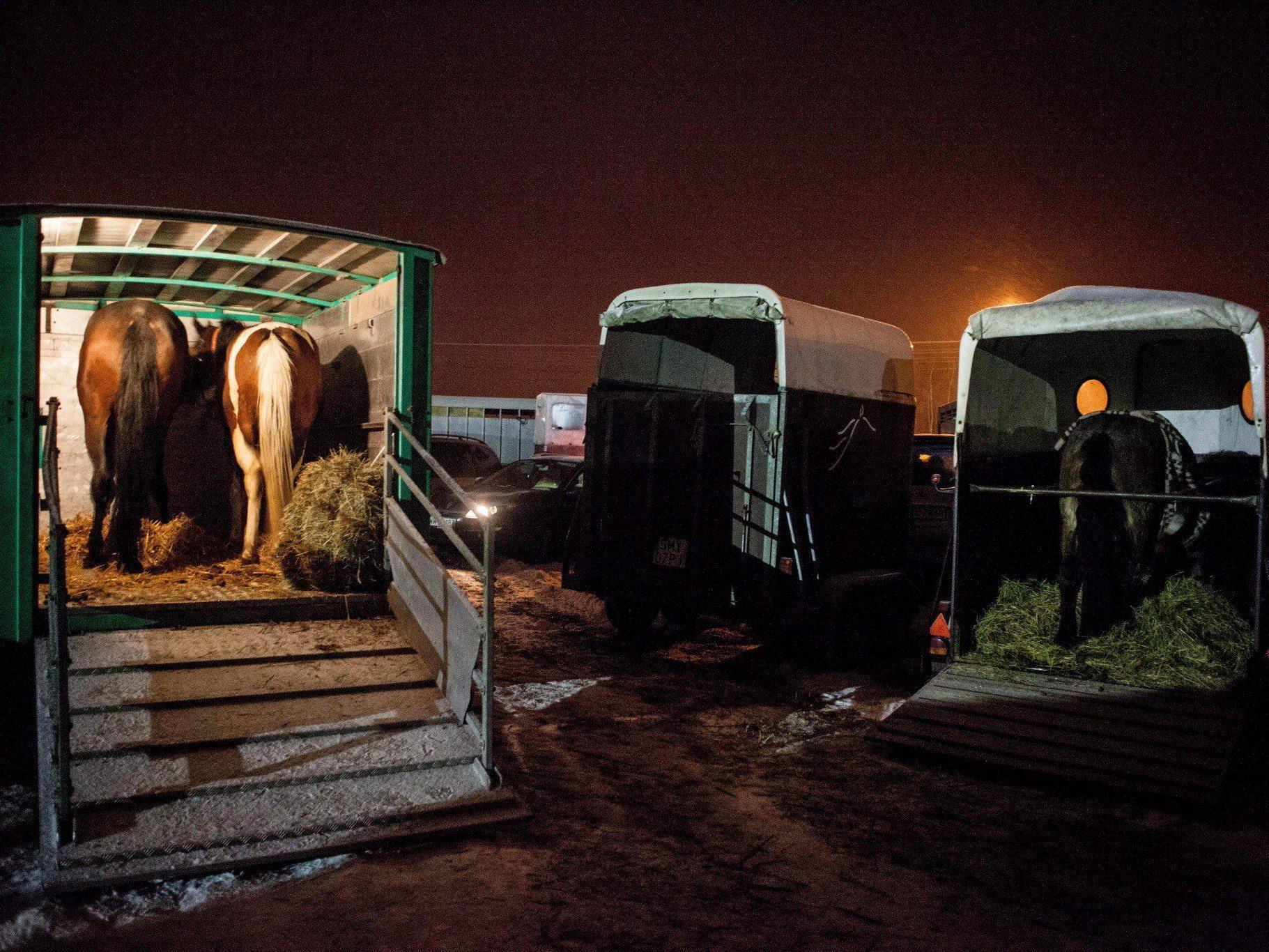 Pferdefleisch-Skandal nahm seinen Anfang in Großbritannien und Irland.