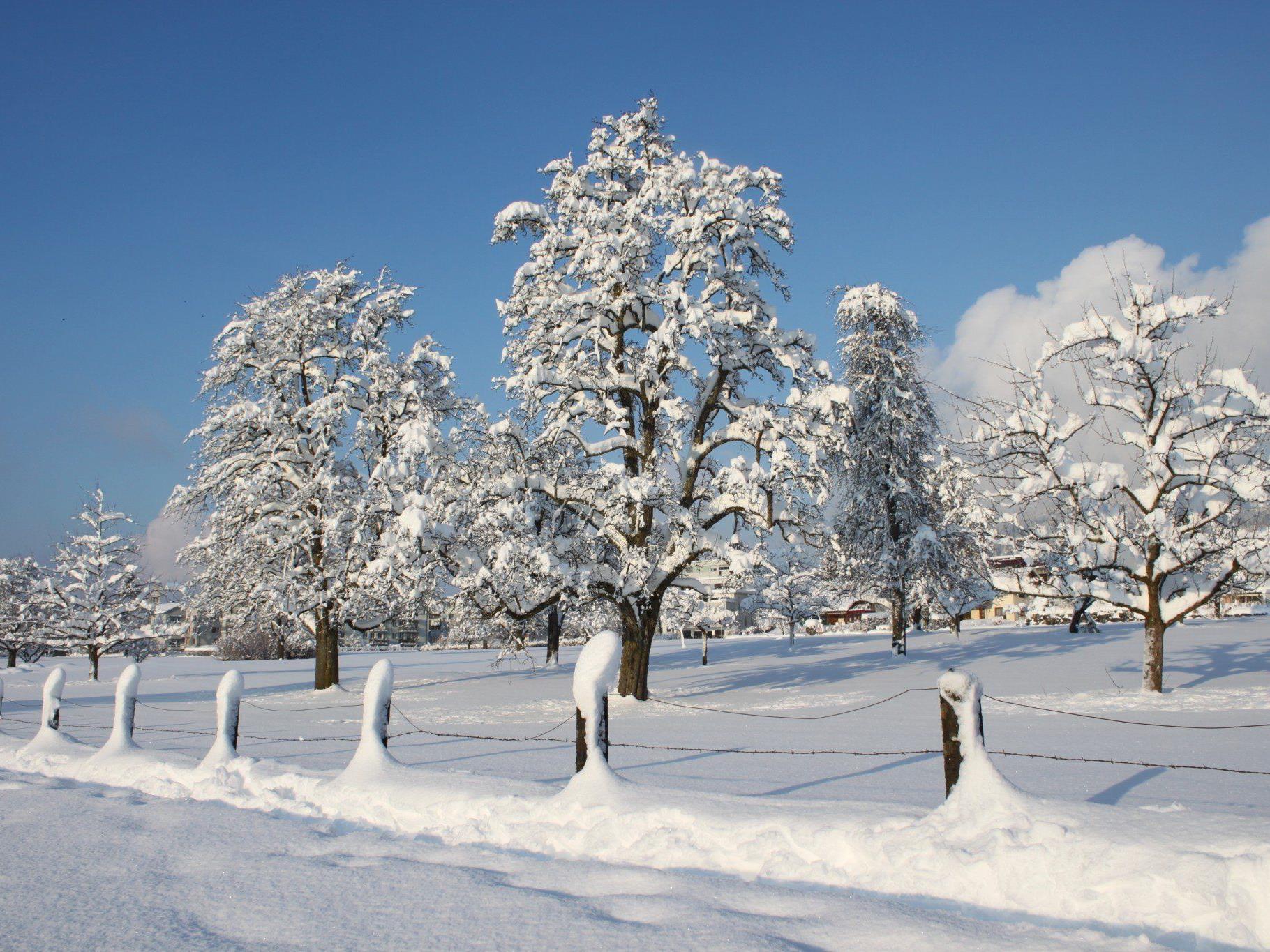 Tief verschneite Hochstammobstbäume präsentieren sich im Sonnenschein.
