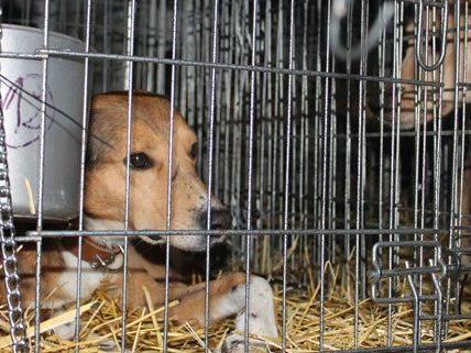 34 Hunde und drei Katzen wurden im Wiener Tierschutzhaus versorgt.