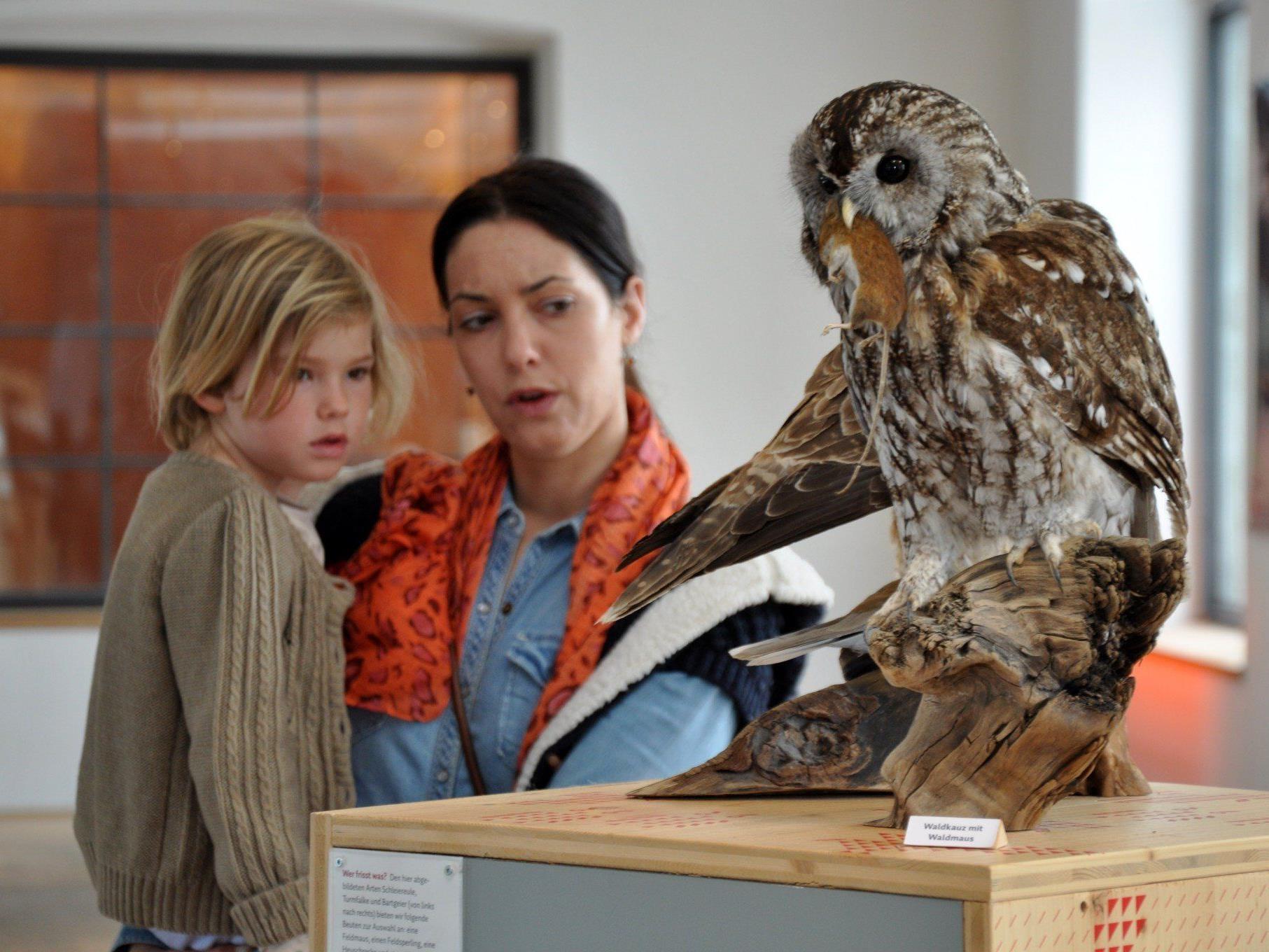Die Ausstellung gibt Einblick in die faszinierende Welt der Greifvögel und Eulen.