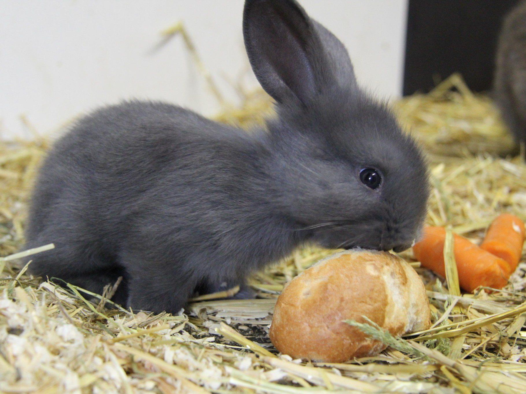 Vorarlberg ist erstes Land mit eigener Tierschutzförderungsrichtlinie.