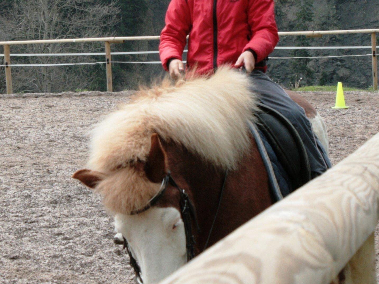 In den Osterferien kann man das Ebnit wieder auf dem Rücken der Pferde erobern.