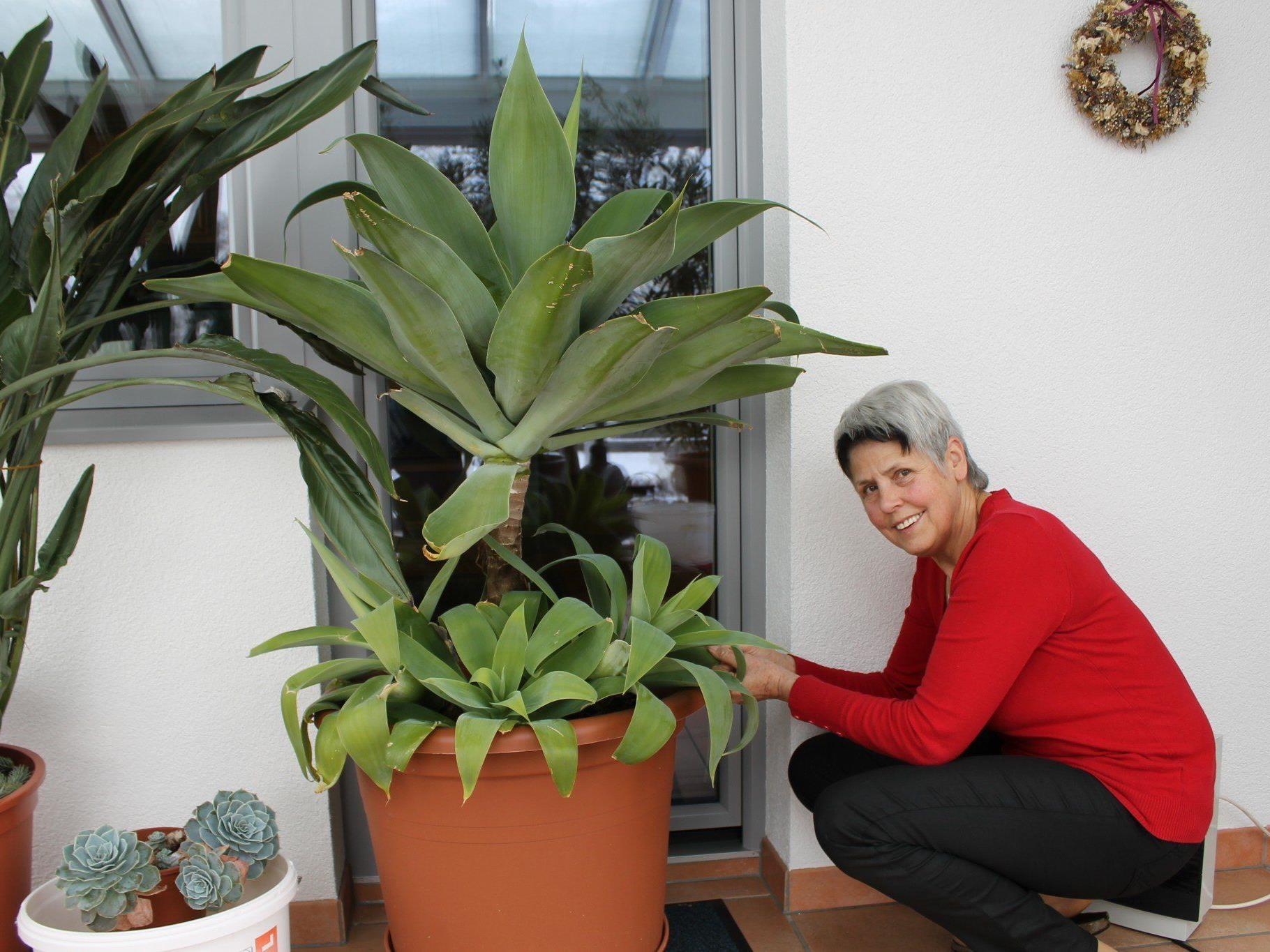 Josefine Walter pflegt nicht nur Zimmerpflanzen
