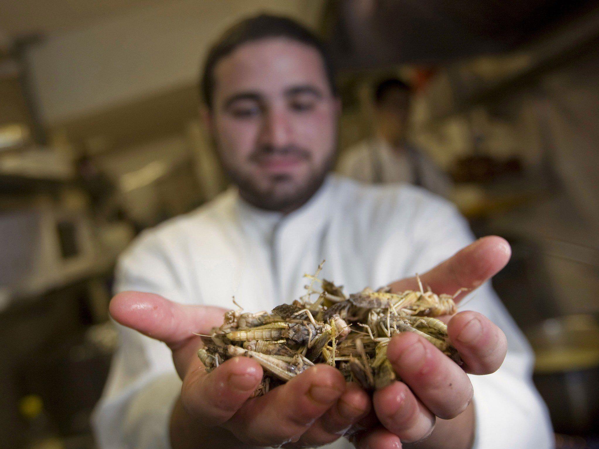 Schwärme kommen aus Ägypten vernichten ganze Ernten.