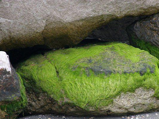 Algen am Strand und auf Steinen sind nicht ungewöhnlich - in Wien sollten sie nun jedoch ein Hotel zieren