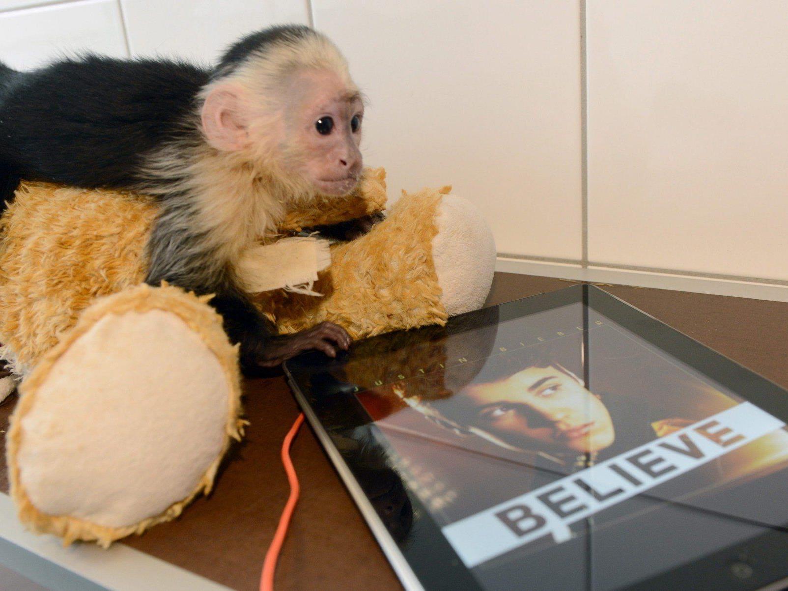 Am Gründonnerstag vom Zoll beschlagnahmt: Biebers Affe Mally ist weiterhin in Münchner Tierheim