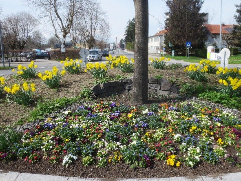 """Auf den verschiedenen öffentlichen Flächen im Ort erfreut der """"Frühling"""" das Auge des Betrachters."""