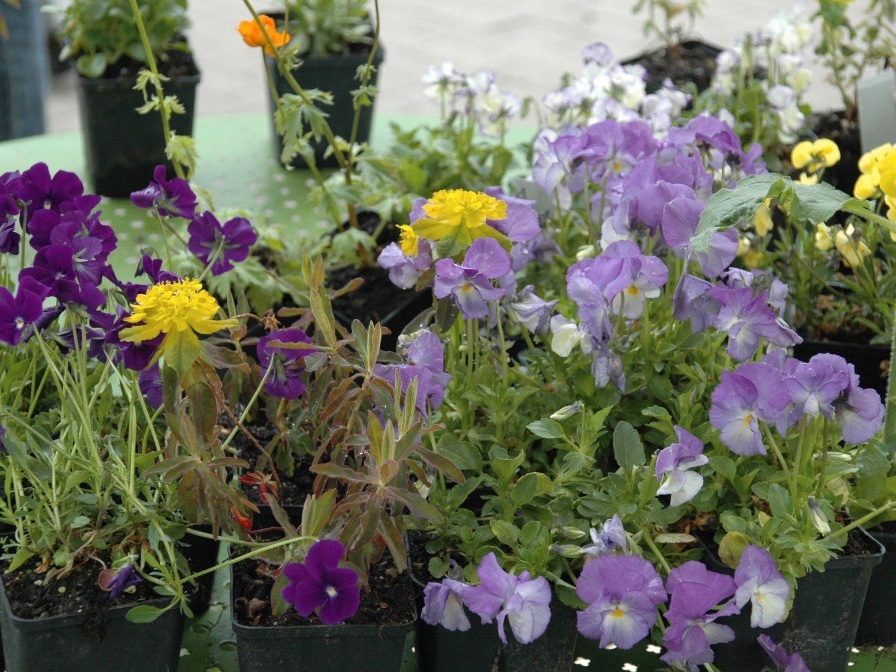 Neben Blumen wird es beim neuen Markt Am Garnmarkt auch bäuerliche Feinkost und regionale sowie internationale Spezialitäten geben